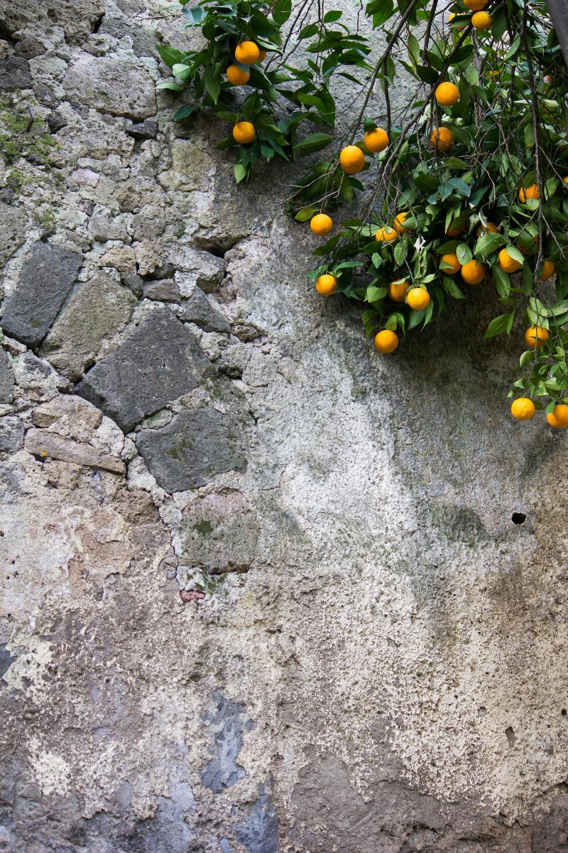 giardino_piccolo