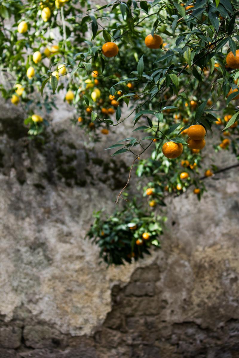 giardino_piccolo_3