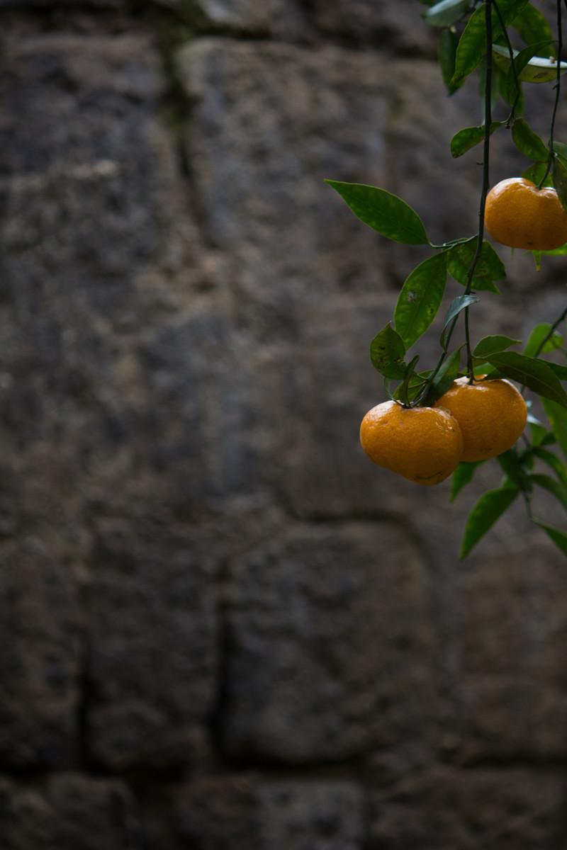 giardino_piccolo_7
